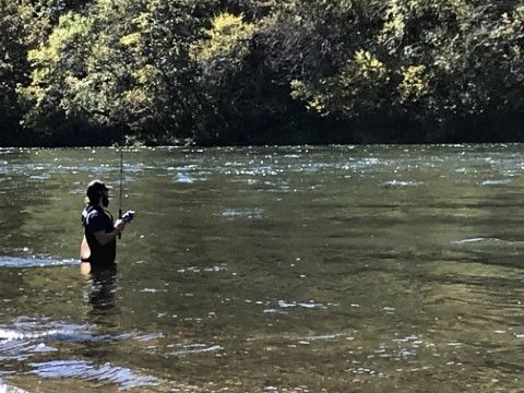 bull shoals arkansas fishing