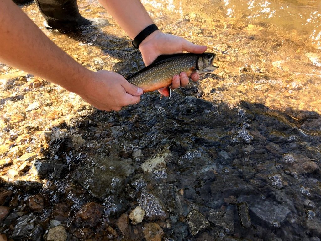 fishing license trout
